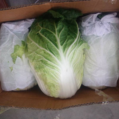 Chinese Fresh Cabbage with Good Quality