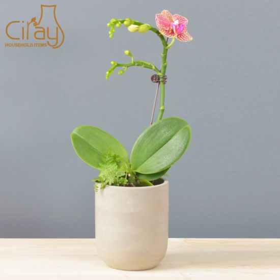 Modern Grey Cement Planter for Orchids